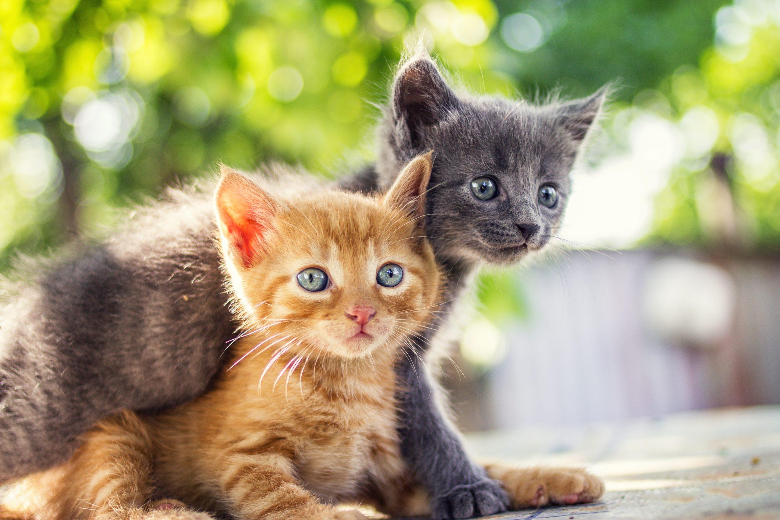Caring For Your New Kitten Bob Martin