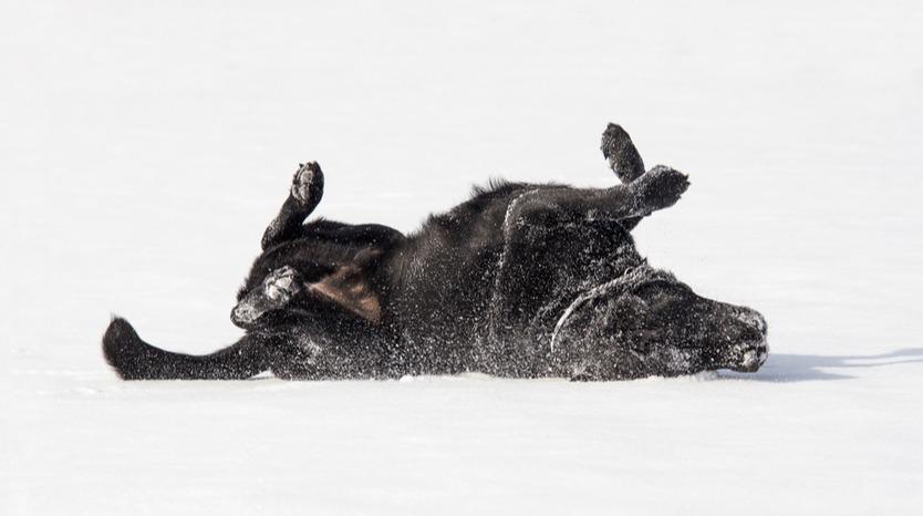 Can Fleas Survive Winter | Bob Martin